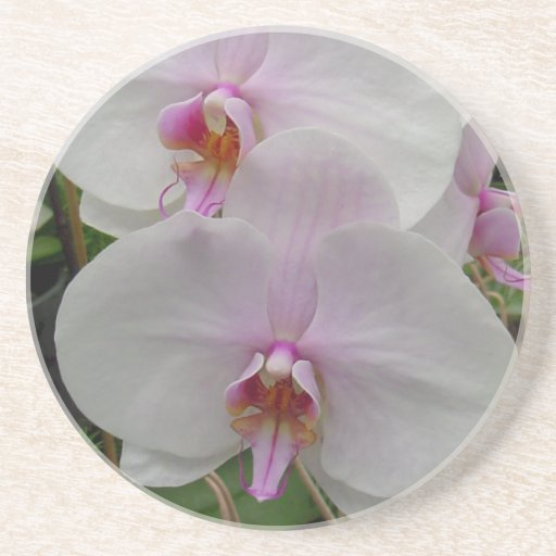 Orchid - Pink Blossom (Colossians 2:3) Drink Coaster
