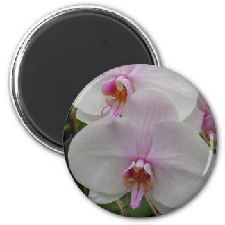 Orchid - Pink Blossom (Colossians 2:3) Magnets