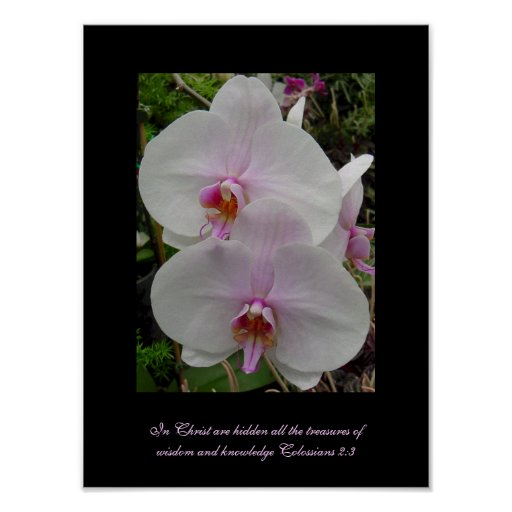 Orchid - Pink Blossom (Colossians 2:3) Posters