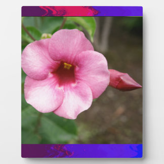 ORCHID pink flower n BUD Love Dating Children Kid Display Plaques