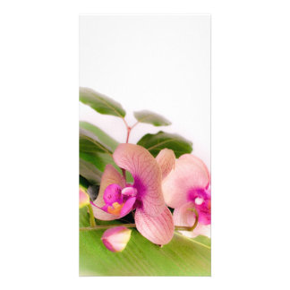 orchid pink photo greeting card