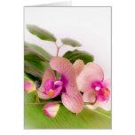 orchid pink tarjetón