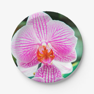 Orchid Pink Tropical Asian Flower Paper Plate