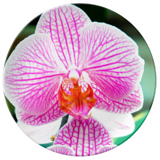 Orchid Pink Tropical Asian Flower Plate