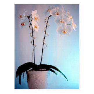 Orchid Plant Postcard