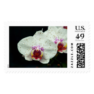 Orchid Stamps