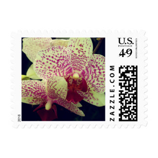 Orchid Postage Stamp