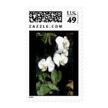Orchid Postage Stamps