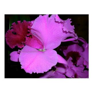 Orchid Postcard