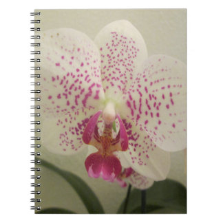 Orchid Purple Splashes Notebook