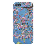 Orchid purple tree against bright blue sky cases for iPhone 5