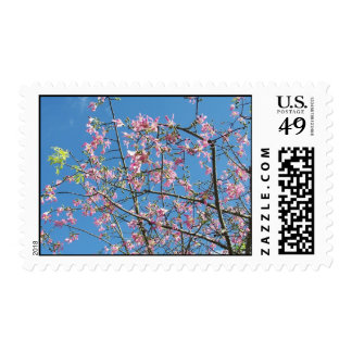 Orchid purple tree against bright blue sky stamp