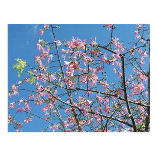 Orchid purple tree against bright blue sky postcards