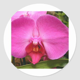 orchid-red product line classic round sticker