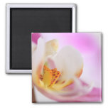 Orchid Refrigerator Magnets