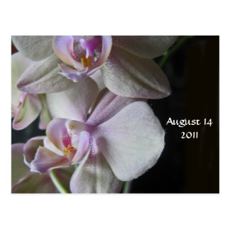 orchid Save the Date Postcard