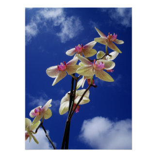 Orchid Sky Poster