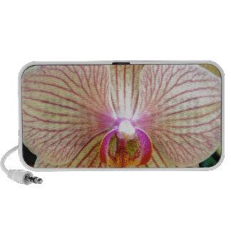 Orchid Mini Speakers