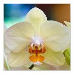 Orchid • Square Card / Invitation