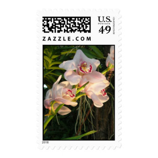 Orchid Stamp