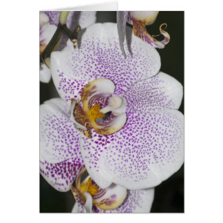 Orchid Stationery Note Card