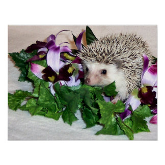 Orchid the Hedgehog Poster