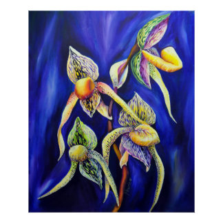 Orchid - The Paphiopedilum   Lady's Slipp Poster