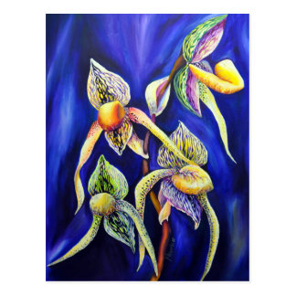Orchid - The Paphiopedilum ,  Lady's Slipper Postcard