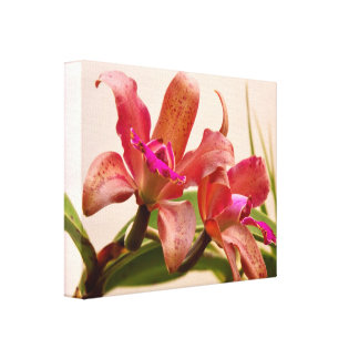 Orchid - Tickled pink Gallery Wrapped Canvas