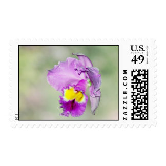 Orchid touched by God for Mom Stamp