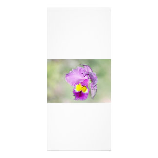 Orchid touched by God for Mom Rack Card Design