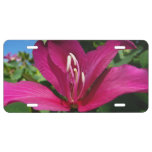 Orchid Tree Blossom License Plate