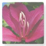 Orchid Tree Blossom Stone Coaster