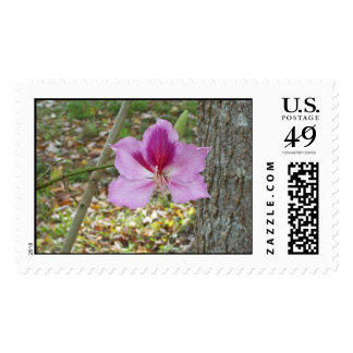 ORCHID TREE POSTAGE