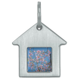 Orchid tree with blue sky pet name tag