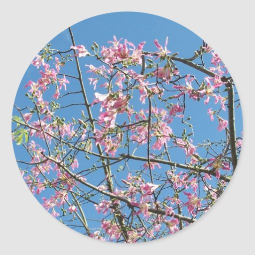 Orchid tree with blue sky stickers