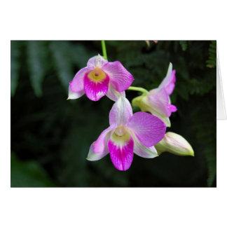 Orchid Trio Card