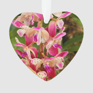 Orchid - Tropical delight Ornament
