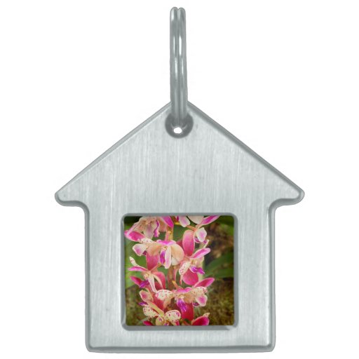 Orchid - Tropical delight Pet ID Tag