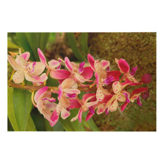 Orchid - Tropical delight Wood Wall Art