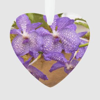 Orchid - Vanda sansai blue
