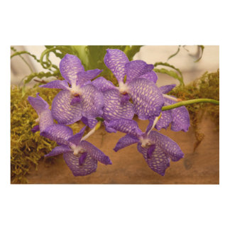 Orchid - Vanda sansai blue Wood Wall Art