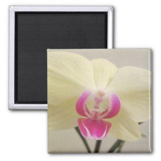 Orchid White Pink Fridge Magnet