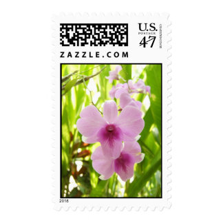 Orchid - World Of Our Own Postage