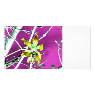 orchid yellow black pink flower picture card