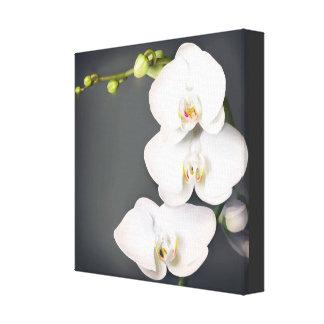 Orchidaceae (orquídeas blancas) impresión en lienzo
