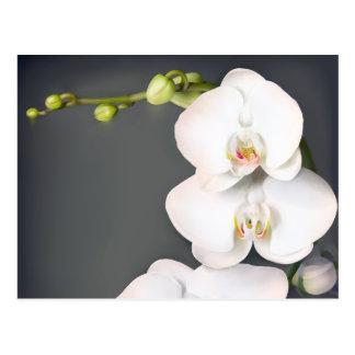 Orchidaceae (orquídeas blancas) tarjetas postales