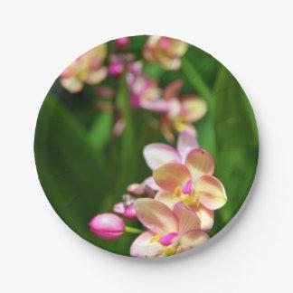 Orchidaceae Paper Plates