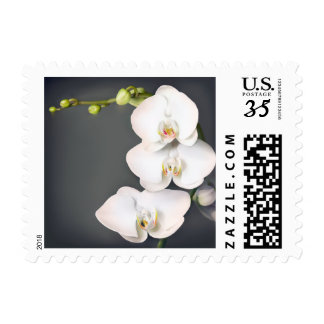 Orchidaceae (white orchids ) postage