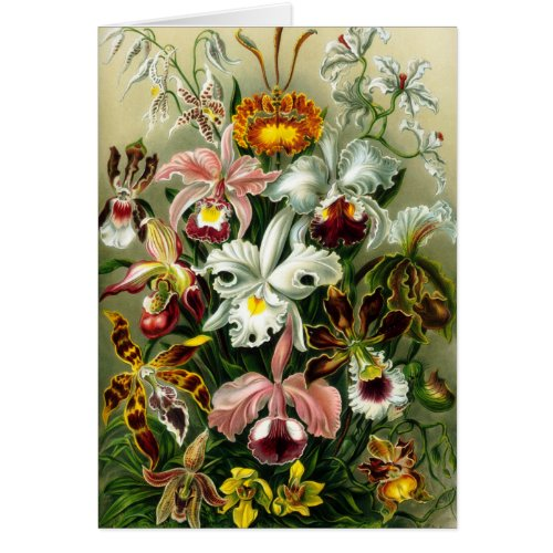 Orchidae card